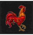 red fiery rooster vintage black engraving vector image