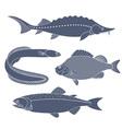 Freshwater Fish vector image