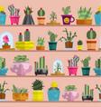 nature succulent home cactus tropical plant vector image