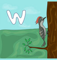 alphabet letter w and woodpecker abc vector image