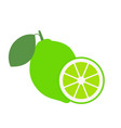 lime with green leaves slice citrus isolated on vector image