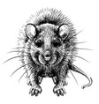 mouse hand-drawn graphic black and white sketch vector image vector image