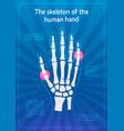 skeleton hands x-ray hand bonesthe vector image vector image