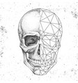 hipster realistic and polygonal skull vector image vector image