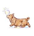 cute corgi dog puppy in arms wall sticker vector image vector image