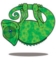 magical chameleon vector image vector image
