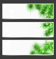 bright shimmering green fir tree branches flyer vector image vector image