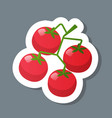 fresh red crerry tomato branch sticker tasty vector image