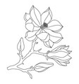 magnolia flower and buds line art perfect for vector image vector image