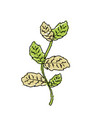 nice plant ingredient to condiment of food vector image vector image