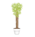 Yucca Tree and Dracaena Plant in Ceramic Pot vector image