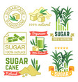sugar production labels sugarcane farm badges and vector image vector image