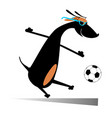 dog playing football isolated vector image