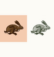 wild hare or rabbit is jumping cute bunny or vector image vector image