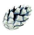 beautiful pine cone vector image vector image