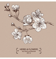 Blossom White vector image vector image