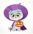 cute cartoon baby cat in wizards hat vector image vector image