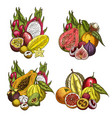 exotic fruit and tropical berry sketches vector image vector image