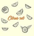 citrus set sketch by hand vector image