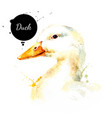 watercolor hand drawn duck head painted sketch vector image