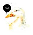 watercolor hand drawn duck head painted sketch vector image