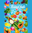 fruits and tropical berries vitamins health food vector image