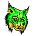 shows an angry bobcat face vector image vector image