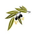 Black olives on a branch dripping olive oil vector image vector image