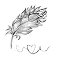 Drawing a bird feather line vector image vector image