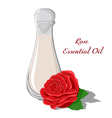 Rose Essential Oil vector image