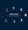 lunar phases from new moon to full vector image