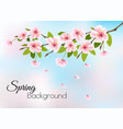nature spring background with pink blossom cherry vector image vector image