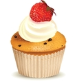 Strawberry muffin vector image vector image