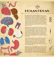 medical concept with human organs vector image