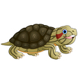 Cartoon baby cute turtle vector image vector image