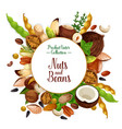 nut and bean seed and herb poster vector image vector image