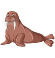 a walrus on white background vector image