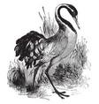 common crane vintage vector image vector image