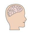 human brain medical schematic anatomy vector image