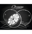 ripe orange vector image