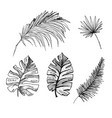coconut palms sketch or queen palmae with leaves vector image vector image