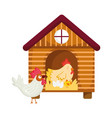 house hen rooster chicken and eggs farm animal vector image