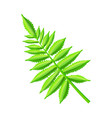 royal fern decorative leaf vector image