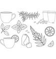 cup of hot tea cup of herbal tea various herbal vector image