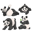 Panda in four different poses vector image vector image