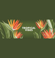 bird paradise flowers banana palm leaves vector image