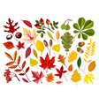 bright autumn leaves and ripe nuts isolated vector image vector image