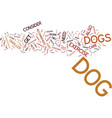 essential care tips for your dog text background vector image vector image