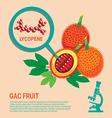 Gac Fruit health Benefits of Lycopene vector image vector image