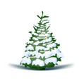 christmas holiday blue snowy tree vector image vector image